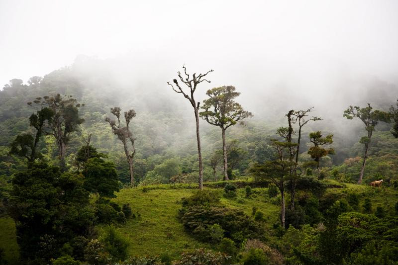 The cloud forest is a must-see for all nature lovers.