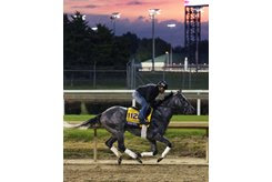 Pavel trains ahead of the Breeders' Cup Classic at Churchill Downs