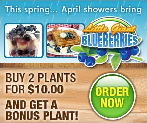 Two Little Giant Blueberry Plants for just $10