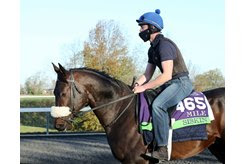 CLASSIC CREDENTIALS: Siskin trains ahead of his final start in the Breeders' Cup Mile at Keeneland. The son of First Defence will take his top-level pedigree with him to Japan as he begins his second career with Shadai Stallion Station