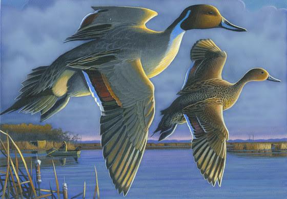2021 Waterfowl Stamp art by Caleb Metrich of Lake Tomahawk