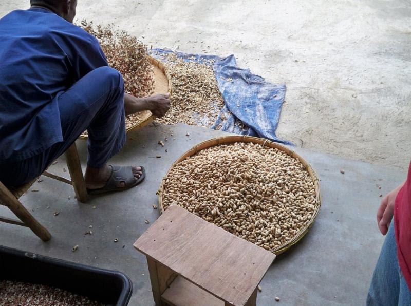 Dumping Peanuts on Haiti