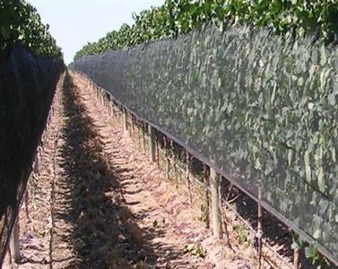 Risques climatiques : les vignes bourguignonnes vont tester les filets pare-grêle