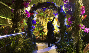 Image of a woman under an arch of orchids