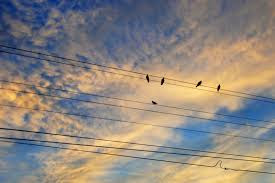 Image result for dawn birds on wires