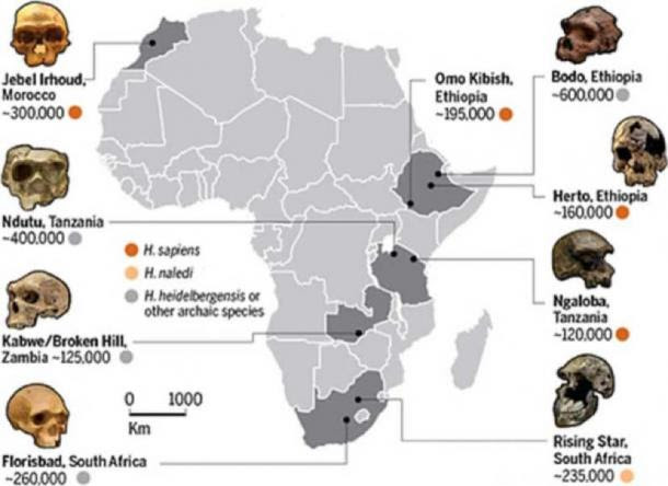'The pan-African dawn of Homo sapiens' CREDIT: (GRAPHIC) G. Grullón/Science; (DATA) Smithsonian Human Origins Program; (PHOTOS, COUNTERCLOCKWISE FROM TOP LEFT) Ryan Somma/Wikimedia Commons; James Di Loreto & Donald H. Hurlbert/Smithsonian Institution/Wikimedia Commons; University of the Witwatersrand; Housed in National Museum of Ethiopia, Addis Ababa, Photo Donation: ©2001 David L. Brill, humanoriginsphotos.com