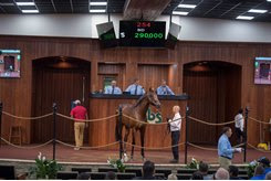 The Distorted Humor colt consigned as Hip 254 in the ring at the OBS June Sale