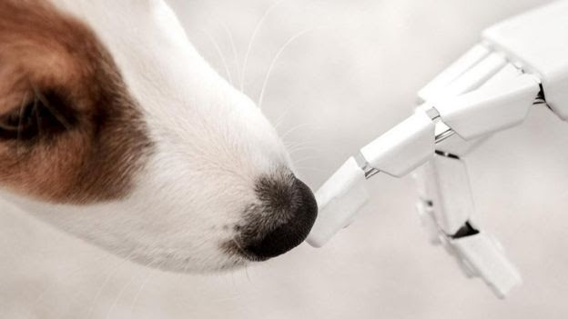 Cachorro cheira dedo de robô