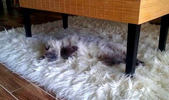 4.26.15 - Pets Who Are Hiding in Plain Sight4
