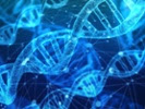 NIH issues $9M for nonhuman primate study of gene-editing safety