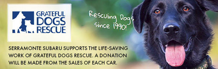 Serramonte Subaru supports the life-saving work of Grateful dogs Rescue. A donation will be made from the sales of each car.