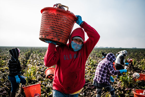 "Migrant farmworkers in Merced, Calif., in January. The president proposed a ""merit-based"" immigration system in a speech on Tuesday that could change the makeup of who is allowed into the United States."