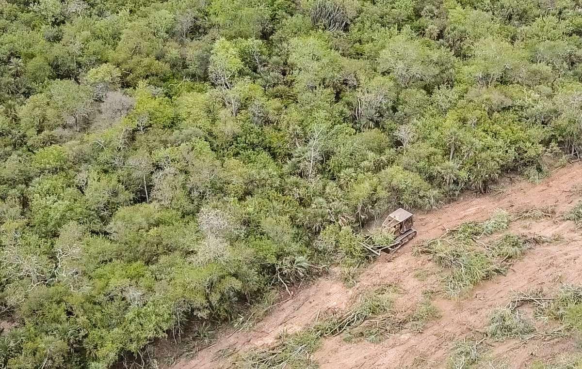 El bosque de los ayoreos está siendo deforestado a un ritmo vertiginoso
