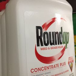 red and white bottle of Monsantos Roundup herbicide on a store shelf
