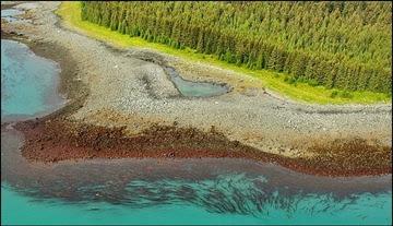 Alaska ShoreZone