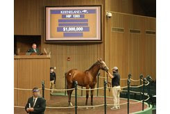 The Into Mischief colt consigned as Hip 1203 at the Keeneland September Sale