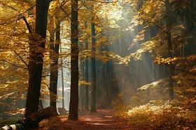 """""""Two Roads Diverge in the Woods …""""- Robert Frost"""