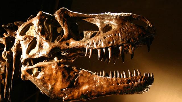 População total do tiranossauro rex chegou a 2,5 bilhões, aponta estudo