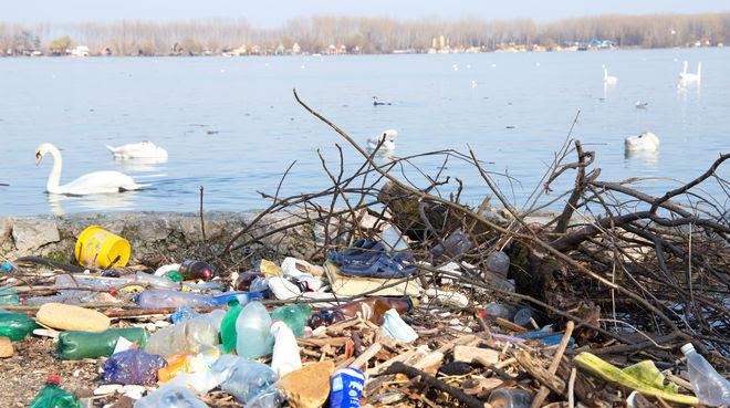 Basura de plástico junto al río y cisnes en el fondo