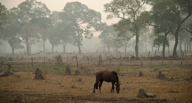 A horse, termite mound and trees are seen surrounded by smoke of the wildfire at the wetland of Pantanal