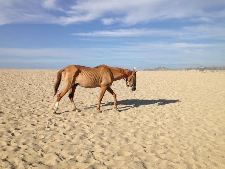 Horse Famine - Public Domain