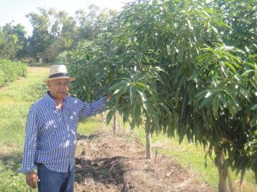 """El mango dominicano apuesta por desarrollarse en Asia y Rusia y trabaja para """"conquistar mercados del alto valor"""""""