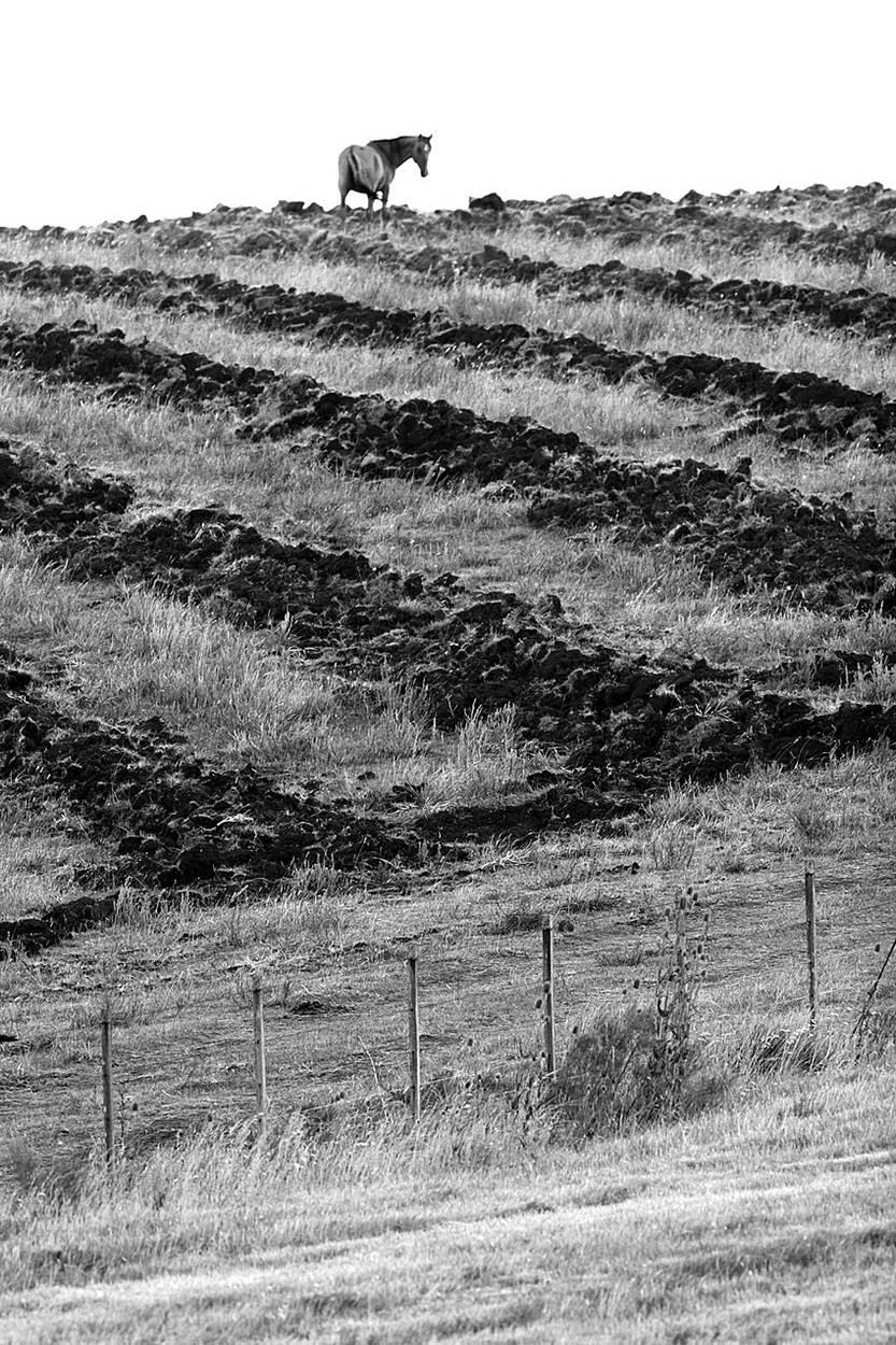 Campos sembrados de eucaliptos, sobre la Ruta Nª 8 en el departamento de Lavalleja. (archivo, febrero de 2007)