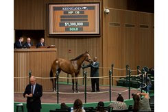 A full sister to Bourbon War sells for $1.3 million during the Keeneland April Sale