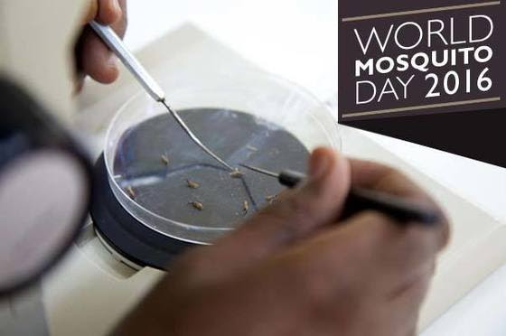 World Mosquito Day 2016