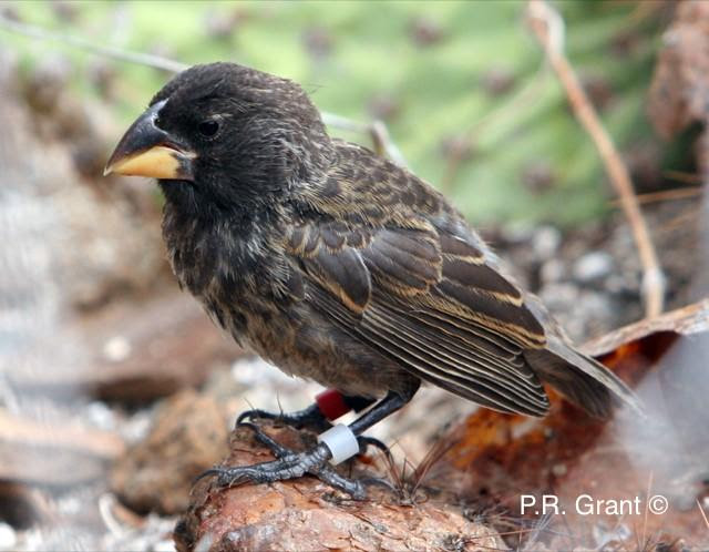 New Species Can Develop in as Little as 2 Generations, Galapagos Study Finds