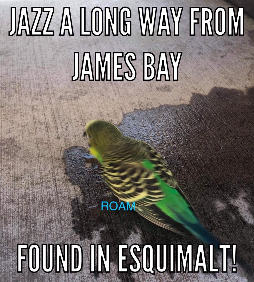 Jazz found