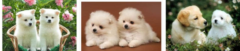 pic of cute puppies