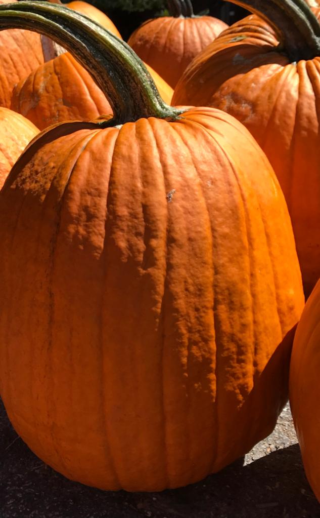 Image Pumpkin