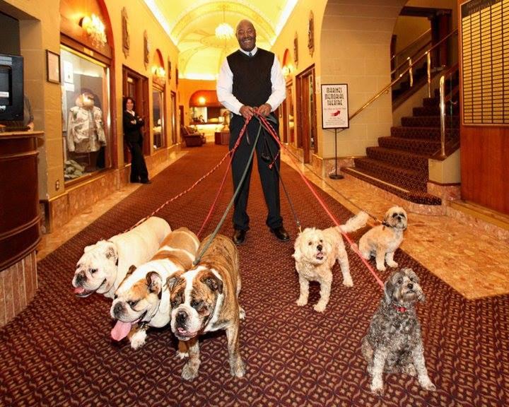 Dog Friendly Lobby