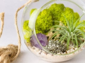 Air Plant Terrarium Kit Amethyst Crystal Point with Pyrite || Small Round