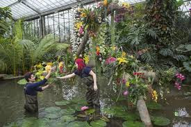 Kew_UK_ Orquideas