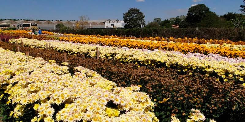 Festa das Flores de Holambra e Atibaia SP