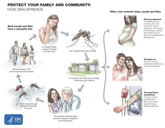 Protect Your Family and Community: How Zika Spreads