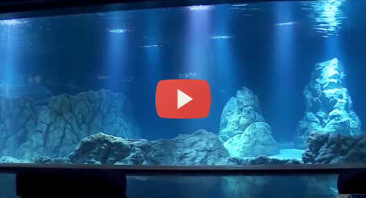 Jerusalem-aquarium-email