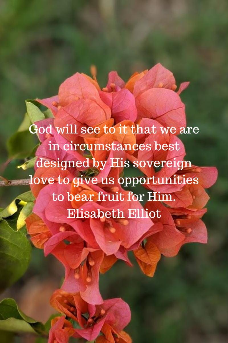 God will see to it that we are in circumstances best designed by His sovereign love to give us opportunities to bear fruit for Him. Elisabeth Elliot.png