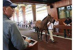 A filly by The Big Beast walks in the back ring at the OBS March Sale