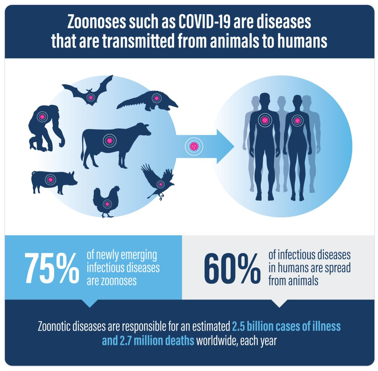 PV_Zoonoses_Infographic