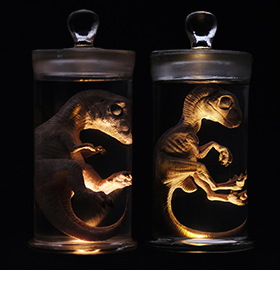 REBOR ODDITIES FETUS WET SPECIMENS