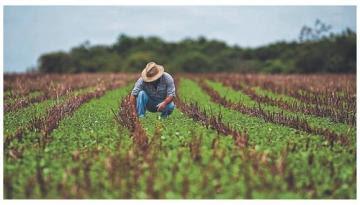 Articulación de pequeños productores organizados con empresas privadas: ¿Qué factores pueden favorecer esta relación en el Perú?