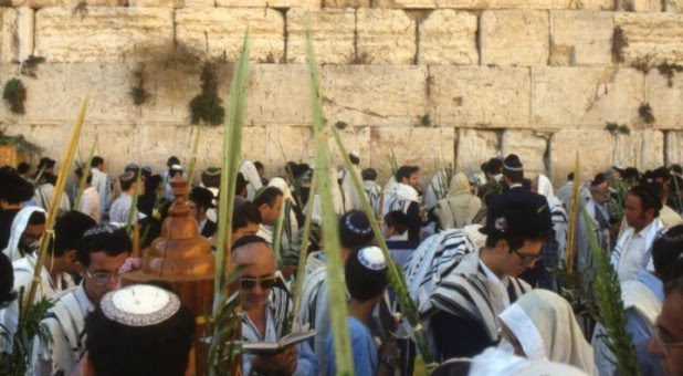 Jews pray with lulav during Sukkot at the Western Wall in Jerusalem.