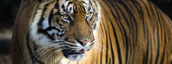 Wwf Protect Species Symbolic Species Adoption My Blog News And