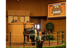 The Quality Road colt consigned as Hip 300 in the ring at the Keeneland September Sale