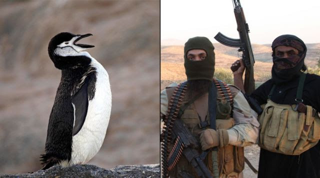 Antarctica Under Attack? Foreign Travel Terror Warnings (Video)