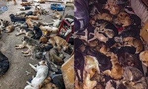 La pandemia desencadena apaleamientos brutales, envenenamientos y una hambruna entre los perros: