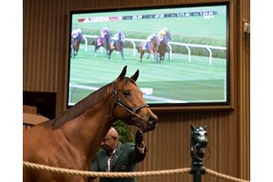 The sale-topping Lady Eli in the ring during the Keeneland November Sale